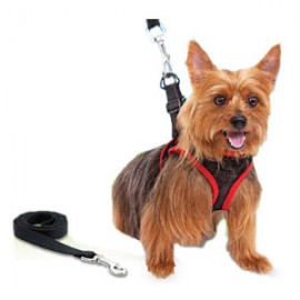 Comfy Control Dog Harness